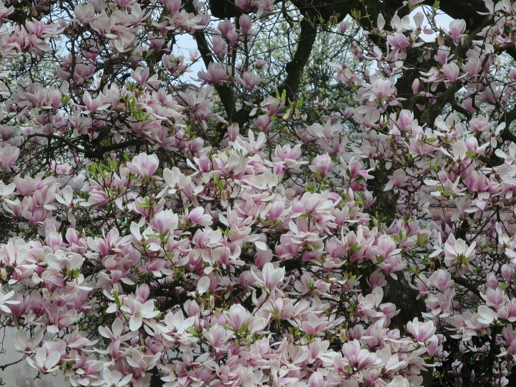 magnoliagrafika
