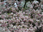 magnoliagrafika.jpeg